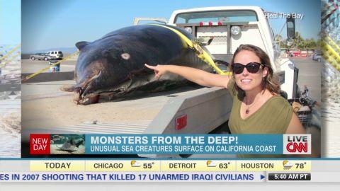 newday wian sea creatures california_00002025.jpg