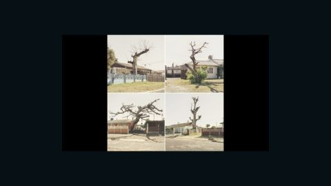 """This image by Dillon Marsh is from a series of photographs called """"Limbo,"""" which shows trees in the Cape Flats that have died, but not yet fallen. The Cape Flats is a poor area east of central Cape Town, home to a large percentage of the city's population."""