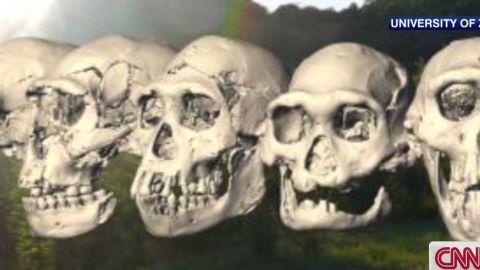 ctw skull found fred spoor_00005013.jpg