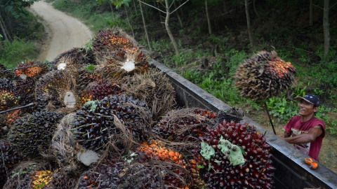 A worker loads harvested palm oil fruits on a palm oil plantation in Indonesia's Aceh province in July.