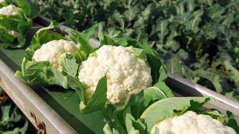 """<strong>Cauliflower</strong><br />Water content: 92.1%<br /><br />Don't let cauliflower's pale complexion fool you: In addition to having lots of water, these unassuming florets are packed with vitamins and phytonutrients that have been shown to help lower cholesterol and fight cancer, including breast cancer. (A 2012 study of breast cancer patients by Vanderbilt University researchers found that eating cruciferous veggies like cauliflower was associated with a lower risk of dying from the disease or seeing a recurrence.)<br /> <br />""""Break them up and add them to a salad for a satisfying crunch,"""" Gans suggests. """"You can even skip the croutons!""""<br />"""