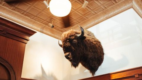 Ted Turner owns the largest private bison herd, consisting of 55,000 bison. - (Kendrick Brinson for CNN)