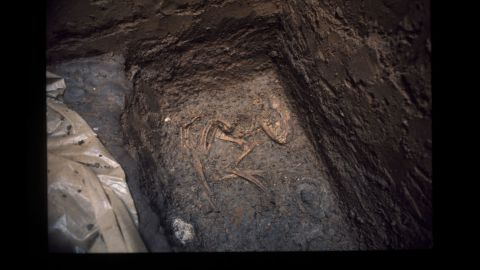 Another view of fossils from a dog burial site in Greene County, Illinois, thought to be 8,500 years old.