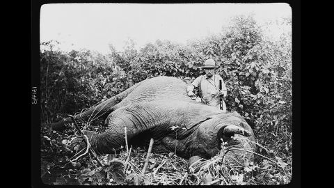"""Theodore Roosevelt, possibly the most famous sportsman to occupy the White House, continued to hunt after leaving office. In 1909, with the backing of the Smithsonian Institution, Roosevelt went on <a href=""""http://www.theodoreroosevelt.org/site/c.elKSIdOWIiJ8H/b.8344379/k.2B69/The_HUNTER.htm"""" target=""""_blank"""" target=""""_blank"""">a yearlong safari</a> that killed or trapped more than 11,000 animals."""