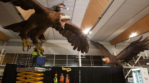 The two great eagles in Wellington International Airport each weigh approximately one ton, and have a wingspan of 15 feet.