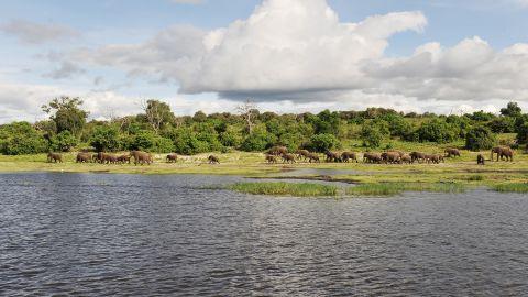 KAZA lies in the Kavanago and Zambezi river basins where Angola, Botswana, Namibia, Zambia and Zimbabwe meet.