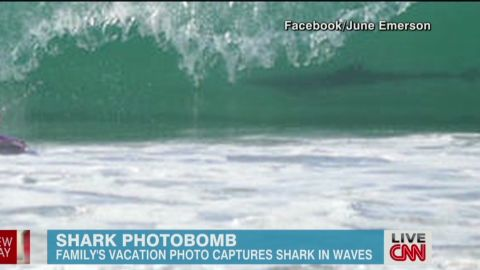 newday shark photobomb_00002922.jpg
