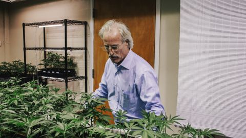 Andrews examines marijuana plants in the grow room of the LoDo Wellness Center. Pot is the third most popular recreational drug in America, after alcohol and tobacco, according to the National Organization for the Reform of Marijuana Laws.