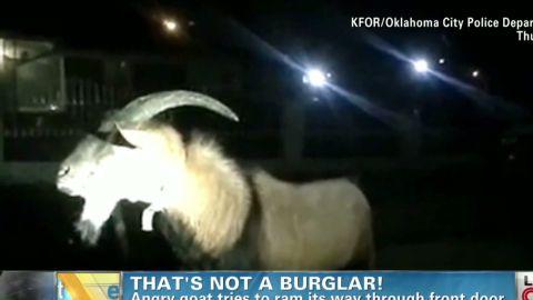 angry goat Earlystart _00004115.jpg