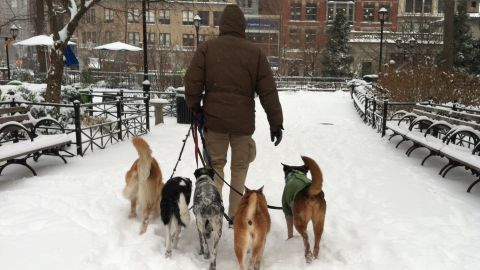 """Friday's snowstorm wasn't going to slow down New Yorkers, whether on two legs or four, said <a href=""""http://ireport.cnn.com/docs/DOC-1072088"""">Marjorie Zien</a>. While commuting to work, she photographed this man walking five dogs in Union Square Park on January 3."""