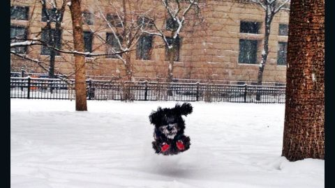 """Three-year-old mixed breed Boris couldn't wait to go outside and romp around. Boris spent Friday morning chasing squirrels in a Chicago park, said his owner,<a href=""""http://ireport.cnn.com/docs/DOC-1072273""""> Liza Heiligman</a>."""