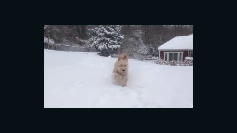 """<a href=""""http://ireport.cnn.com/docs/DOC-1072214"""">Karsh Sahay's</a> goldendoodle puppy was beside himself when he ran out into the snow in Glen Head, New York, an area that had more than 10 inches of snowfall on January 2."""