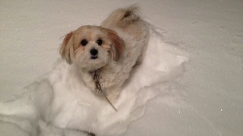"""It was a snowy evening on January 2 when <a href=""""http://ireport.cnn.com/docs/DOC-1072210"""">Melissa Nims</a>' 2-year-old pomapoo Chloe wanted to go outside. Her area of Macedon, New York, got more than 12 inches of snow. It was the perfect amount for Chloe to play in. """"She ran around and kept sticking her face into the snow,"""" she said."""