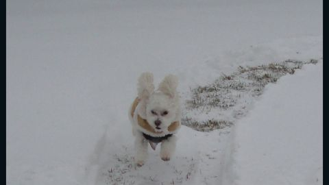 """<a href=""""http://ireport.cnn.com/docs/DOC-1072358"""">Barbara and Steve Elinski </a>say their pup Teddy just couldn't get enough of the fluffy white powder that piled up outside their home in Cohoes, New York, after the nor'easter came through on January 3. He was enjoying the snow so much that the Elinskis had to carry him back inside before he froze."""