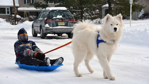 """This samoyed named <a href=""""http://ireport.cnn.com/docs/DOC-1072647"""">Chewie</a> looks majestic against the snowy backdrop in New Providence, New Jersey. The area got more than 7 inches of snow on January 3 and Chewie can't get enough of the fresh powder."""