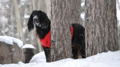 """Even though her 10-year-old gordon setter Pete is getting older, <a href=""""http://ireport.cnn.com/docs/DOC-1072677"""">Christine Nelson</a> says he enjoys everything about the snow. The Wisconsin resident photographed Pete trotting through the snow in their backyard after more than 20 inches accumulated in some parts of their area."""