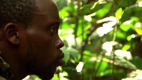 spc inside africa western lowland gorillas c_00003024.jpg