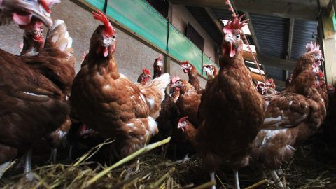 """<strong>December 11, 2013:</strong> The FDA <a href=""""http://www.cnn.com/2013/12/11/health/fda-antibiotics-farms/"""">announces</a> it wants to phase out the use of certain antibiotics in food-producing animals."""