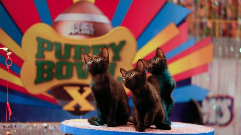During the puppy bowl, kittens provide the half-time entertainment.