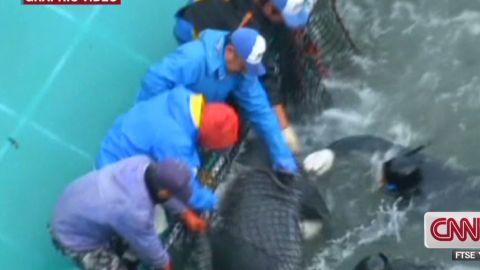 hancocks.japan.dolphin.hunt_00003304.jpg