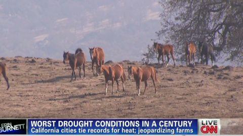 erin dnt lah california drought hurting horses_00001610.jpg