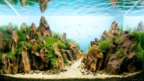 In this aquascape by Hungarian enthusiast Melinda Koncsik, water seems to transform into the sky, while ripples on the surface serve as clouds. The 20-liter tank includes red cherry shrimp.