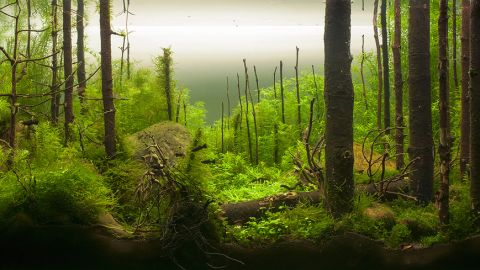 """This aquarium by a Russian aquascaper is meant to recreate the Russian taiga. A judge at the International Planted Aquarium Design Contest praised it in these terms: """"It looks so realistic: dead and fallen trees, green dense carpet of mosses and ferns, big anthills, rocks left there by glacier..."""""""