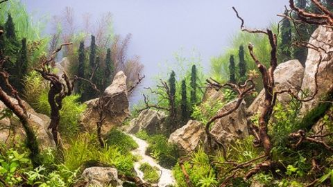 It is hard to believe that this wild landscape is inside an aquarium made by a particularly skillful Russian aquascaper. - (Courtesy all4aquarium.ru)