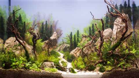 """This Russian aquarium features several large rocks. Karen Randall, a board member at the <a href=""""http://www.aquatic-gardeners.org/"""" target=""""_blank"""" target=""""_blank"""">AGA</a>, says it is important for aquascapers to think of """"hardscapes"""" around which to build their designs. """"In the terrestrial garden, the gardener usually has to think more about the natural terrain he or she has to work with,"""" she says. """"The only thing we start with is 4 glass walls."""""""