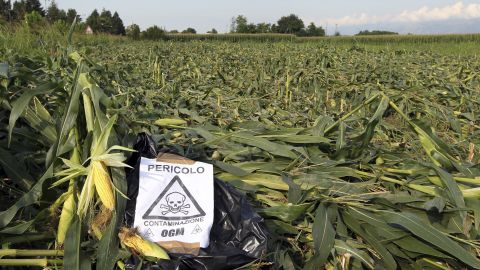 """A sign, """"Danger, GMO contamination,"""" is posted by almost an acre of nearly mature GM corn that earlier had been trampled by anti-GMO activists, near Pordenone, northern Italy, in 2010."""