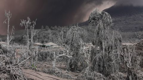 Crops were damaged and covered in ash.