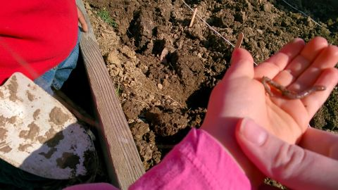 A kindergarten student took this photo with Glass while working in the school garden. She was planting a bulb for spring and discovered a worm.