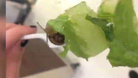 dnt hi snail found in school lunch_00001025.jpg