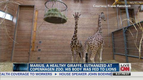 ac zookeeper giraffe_00003428.jpg