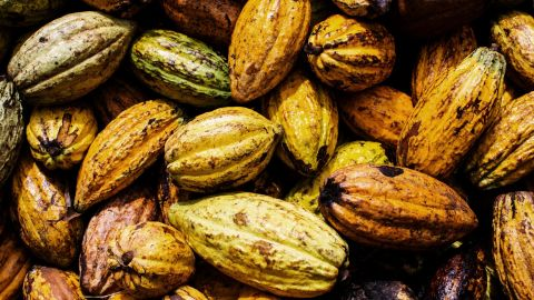 More than a third of the world's cocoa is grown in the Ivory Coast; the cocoa industry directly supports about 3.5 million people in the West African country.
