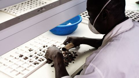 A worker checks the condition of cocoa beans to make sure they are free of mold, insect damage and disease.