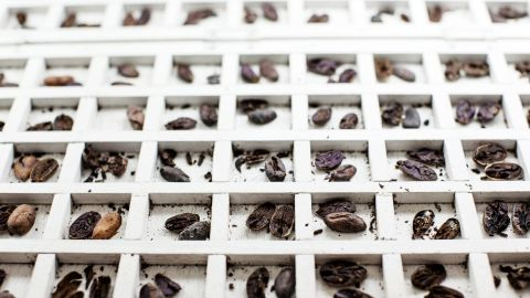 The beans are checked and graded according to quality and condition before being packed ready for shipping.