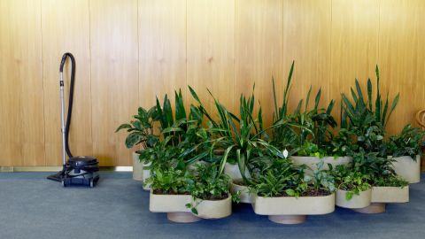 <strong>Plants in your home</strong><br /><br />Mold is a common household allergen. But while most people make sure to clean the bathroom and check the basement, they forget about their indoor plants, Bennett says. Mold can form on leaves or in overwatered soil, releasing mold spores into the air. If you're allergic to mold, inhaling these spores can lead to trouble breathing, coughing and eye/throat irritation. <br /><br />To prevent mold from forming in the first place, keep a thin layer of gravel at the bottom of every potted plant to help with drainage, and place plants in well-ventilated areas.