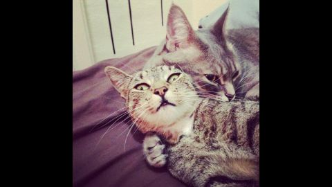Mowgli and Dilla are short-haired tabby cats. Goulder's allergy symptoms worsen if they sleep in bed with her, but she lets them anyway.