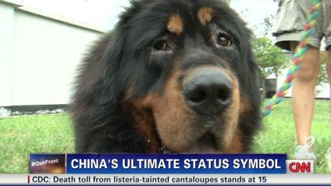 erin dnt tibetan mastiffs worlds most expensive dog_00000307.jpg