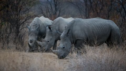 """Globally there were 12 million wildlife tourism trips in 2013 (the last full year of data available), and numbers are rising 10% annually, suggesting positive signs for the industry -- should it counter the existential threats to it, such as """"the dramatic increase<br />in poaching and illicit trade of wildlife products since 2005,"""" which """"threatens to undermine conservation achievements,"""" according to UNTWO."""
