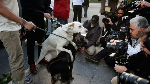 Sochi stray dogs arrive in the United States for adoption