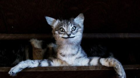 Kat Su's website, Crappy Taxidermy, is full of gems like this. Mittens isn't so cute anymore, is he?
