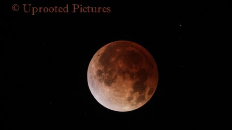 """<a href=""""http://ireport.cnn.com/docs/DOC-1120755"""">Jeffrey Root</a> shot this photo of the April 15 blood moon through a telescope in Salt Lake City."""