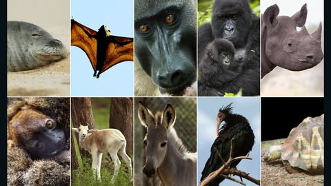 africa endagered animals composite