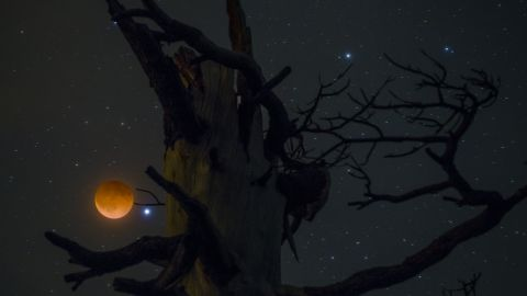 """<a href=""""http://ireport.cnn.com/docs/DOC-1120903"""">Abe Blair</a> says it was cloudy when he got up to take pictures of the blood moon, but he decided to try anyway. """"I am glad I trusted my gut feeling,"""" he said. Blair had picked this tree out earlier in the day, but he had to hike for about 15 minutes in the dark to get there. He shot a two-second exposure for the moon and a 20-second exposure of the tree, and then combined the images in Photoshop."""
