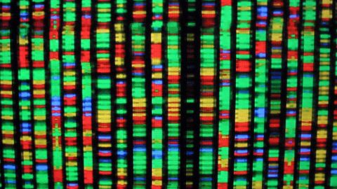 393282 04: A digital representation of the human genome August 15, 2001 at the American Museum of Natural History in New York City. Each color represents one the four chemical compenents of DNA. (Photo by Mario Tama/Getty Images)