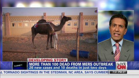 erin gupta mers outbreak camels_00005420.jpg