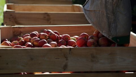 Last year, apples came in at No. 2 after having been a list leader for the past five years. This year, apples fell to the fourth spot on the list.
