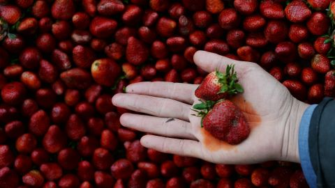 """Every year, the Environmental Working Group publishes its <a href=""""http://www.ewg.org/foodnews/dirty_dozen_list.php"""" target=""""_blank"""" target=""""_blank"""">Dirty Dozen</a> list, naming the fruits and vegetables that rank highest in pesticide residue. This year, strawberries remained at the top of the list; a single sample of strawberries showed 20 pesticides."""
